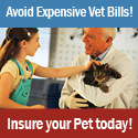 Pets Health Insurance Pic